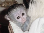 Lovely Baby Spider Monkey